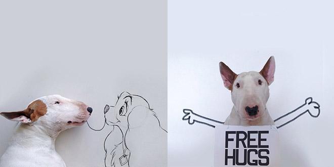 chien instagram bull terrier
