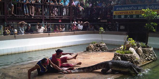 ferme aux crocodiles spectacle bangkok suicide