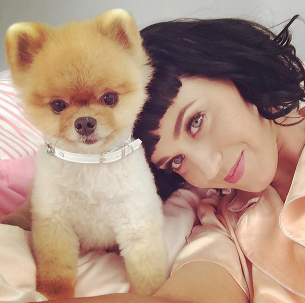 Jiff le Pomeranian chien katy perry