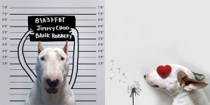 jimmy choo chien instagram