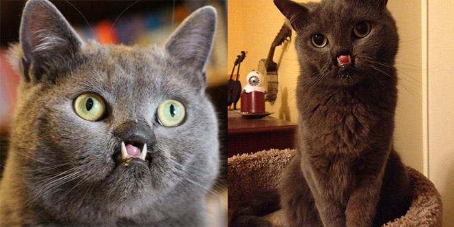 lazarus chat dents