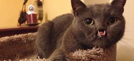 lazarus chat vampire