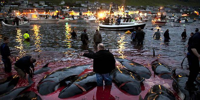 massacre dauphins cover