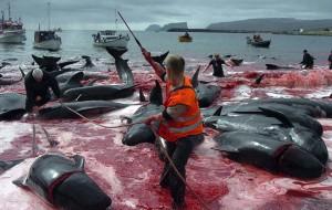 massacre-iles-feroe