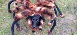chien déguisé araignée caméra cachée