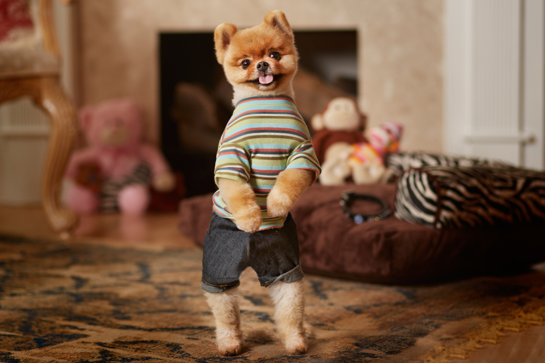 Jiff le Pomeranian chien