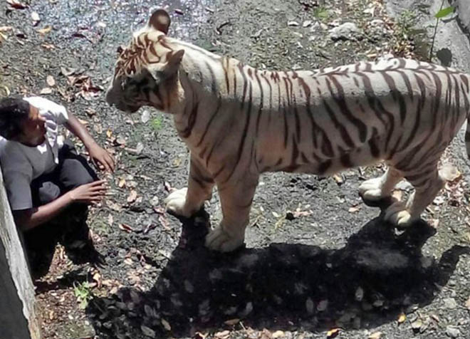tigre-attaque-homme-zoo-1