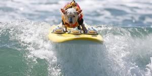 Surf City Surf Dog californie