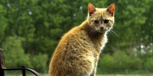 chat ardennes tue