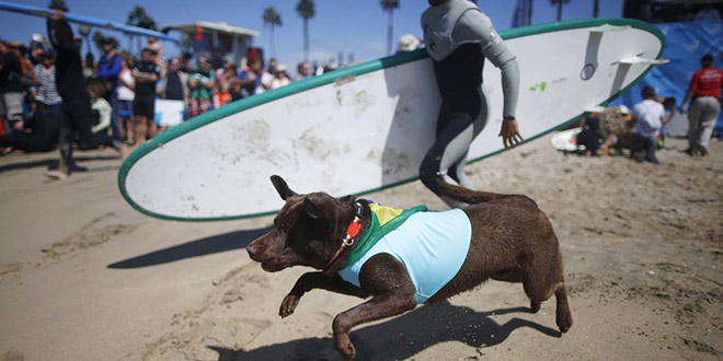 city Surf Dog