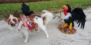costumes halloween animaux chien