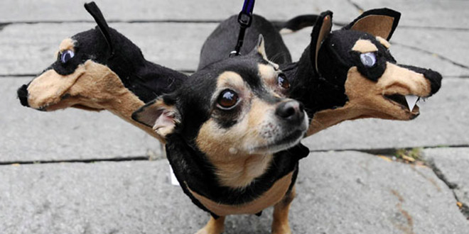 costumes halloween animaux chien drole