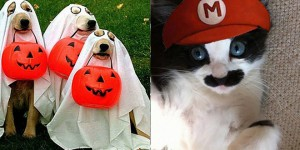 costumes halloween animaux chiens chats