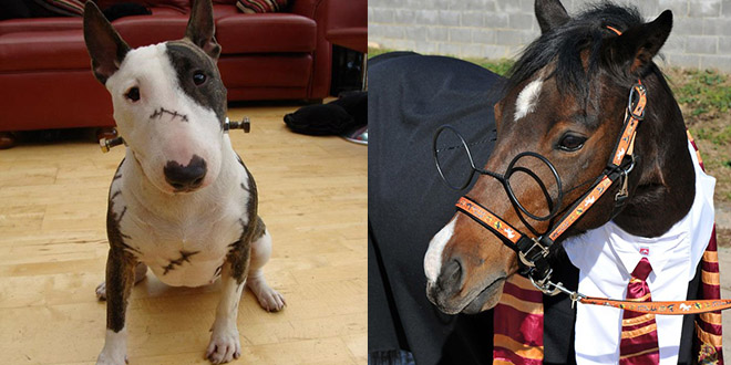deguisement halloween animaux cheval chien