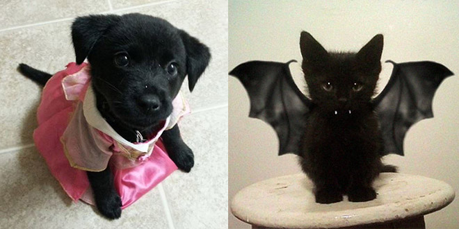 deguisement halloween animaux chiot chaton
