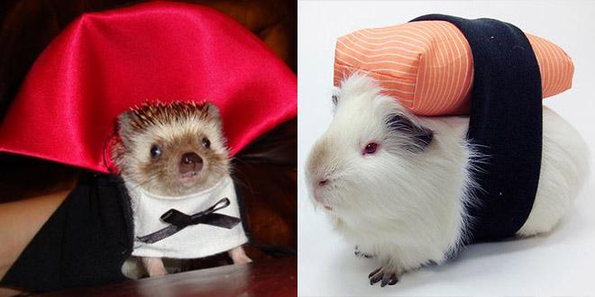 deguisement halloween animaux herisson souris