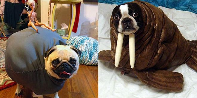deguisement halloween chiens droles