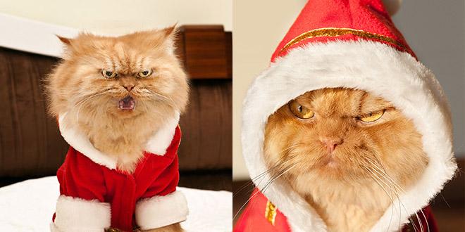 garfi cat