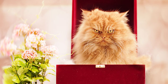 garfi cat mechant