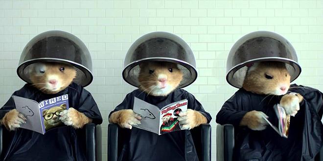 hamsters pub kia