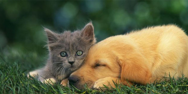 mssgs chat et chien