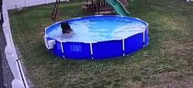ours baignade piscine jardin