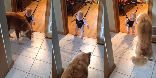 bebe chien saute