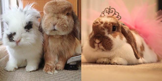 bunny mama lapin