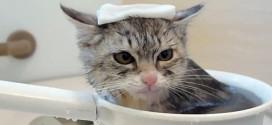 chat bain