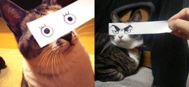chat montage cat