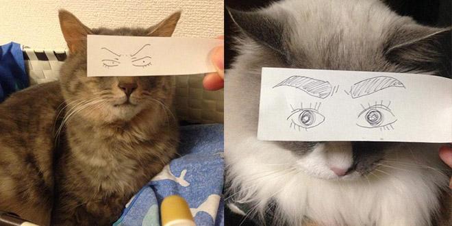 chat montage jeu