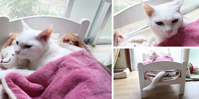 chats ikea lit poupee