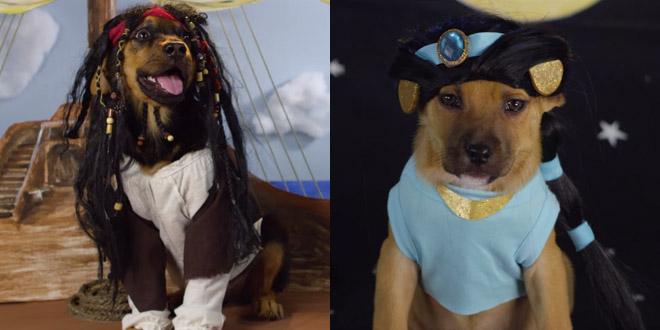 chien disney deguisement