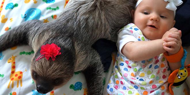 daisy alia paresseux bebe amitie