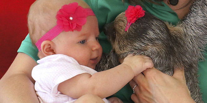 daisy alia paresseux bebe enfant