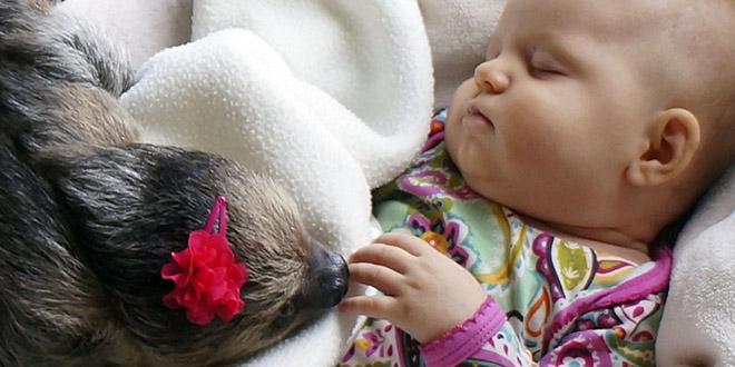 daisy alia paresseux bebe insolite