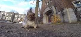 ecureuil camera go pro voleur