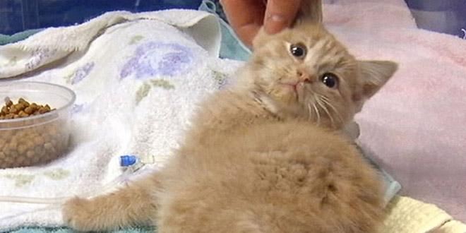 kitten elsa neige chat sauve