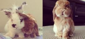 lapin bunny mama