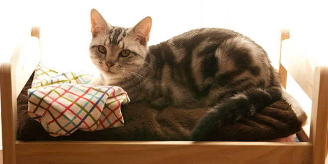 les japonais transforment des lits de poup es en lits pour chats. Black Bedroom Furniture Sets. Home Design Ideas