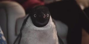 monty pingouin