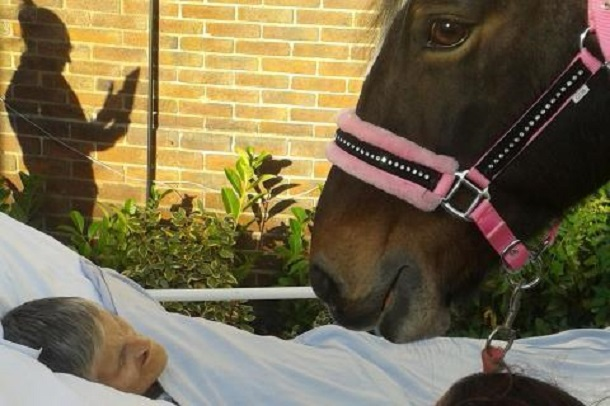 sheila adieu cheval