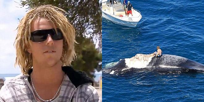 surfer australie baleine morte requin