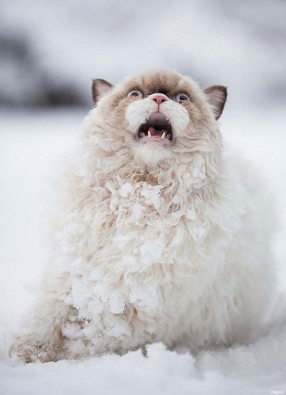 chat neige peur premiere fois