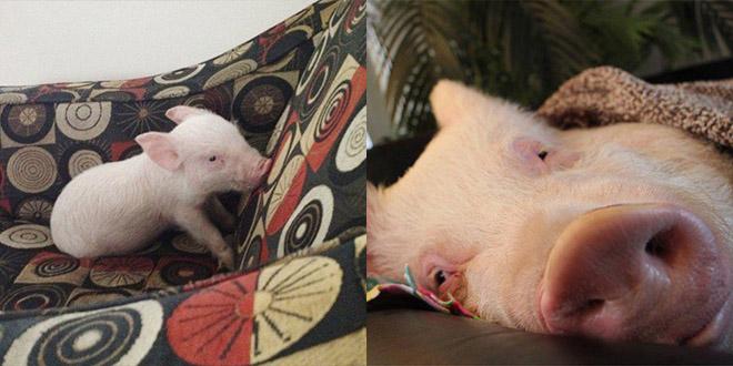 bebe cochon esther grossi