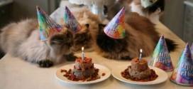 chat anniversaire