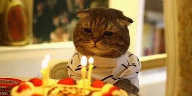 chat anniversairedd