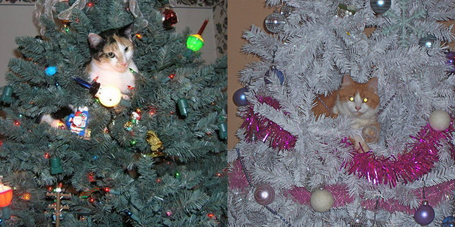 chat cache sapin noel