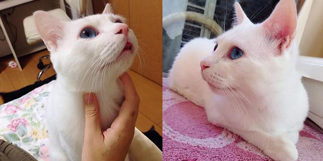 chat dort bizar japon