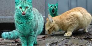 chat tout vert
